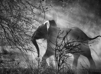 Parc national de Kafue, Zambie, 2010. / © Sebastião Salgado