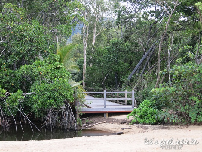 Palm Cove Beach - The Mangrove