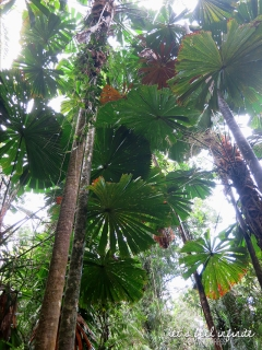 Balade Mangrove 1