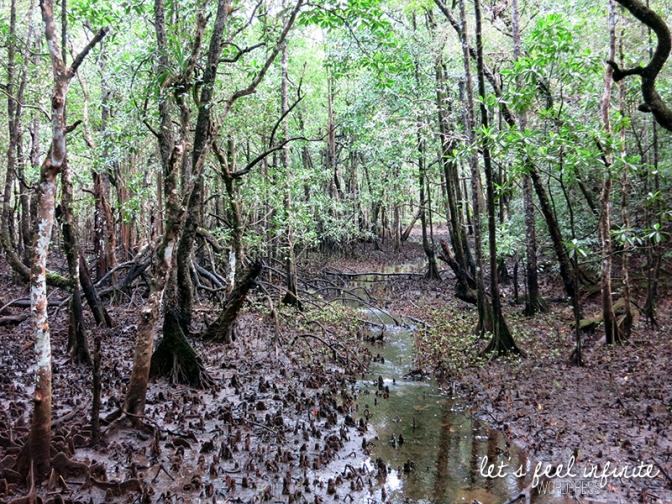 Balade Mangrove 2