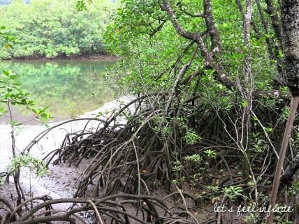 Balade Mangrove 3