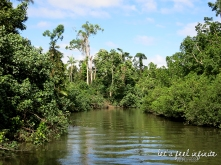 Daintree River 5