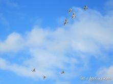 Daintree River - Oiseaux