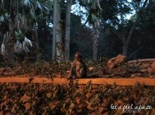 Ubud - Monkey of the Monkey Forest 1