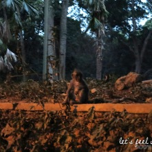 Ubud - Monkey of the Monkey Forest 1