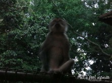 Ubud - Monkey of the Monkey Forest 2