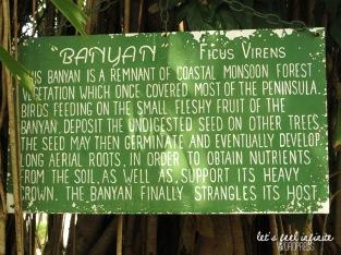 Banyan Caravan Park - Banyan Tree Sign