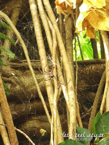 Banyan Caravan Park - Golden Spider