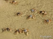Whitsundays - Crab army at Whitehaven Beach