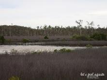 Tin Can Bay - Bush 3