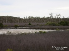 Tin Can Bay - Bush 3