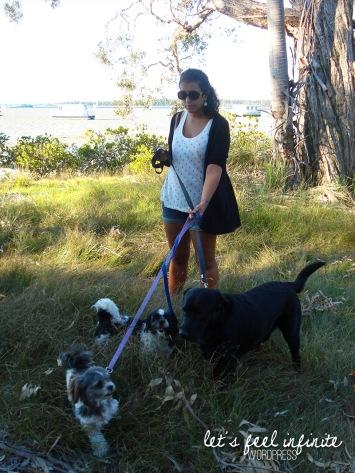 Tin Can Bay - Dogwalking