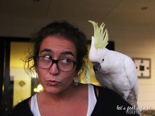 Tin Can Bay - Franco the cuckatoo & Mood