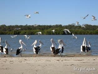 Tin Can Bay waters - Bird's Island