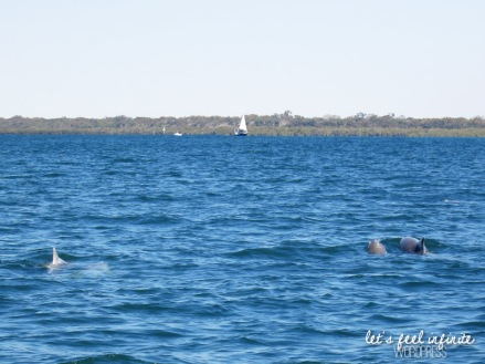 Tin Can Bay waters - Les dauphins! 3