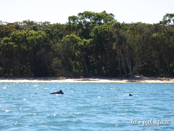 Tin Can Bay waters - Les dauphins!