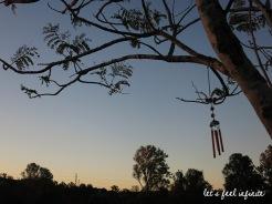 Brisbane - Kangourous du cimetière de Mt Omaney 4