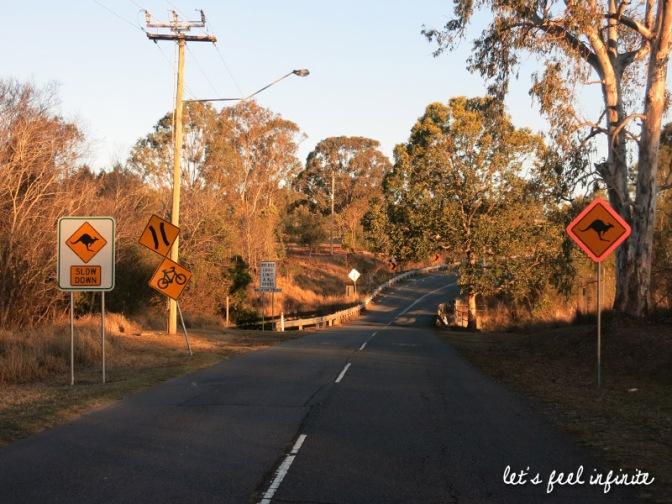 Brisbane - Kangourous du cimetière de Mt Omaney 5