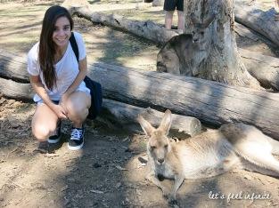 Lone Pine - Among kangaroos 3