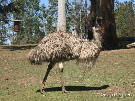 Lone Pine - Emu