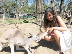 Lone Pine - Feeding kangaroos 3