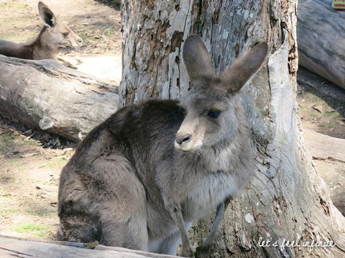 Lone Pine - Kangaroo 4