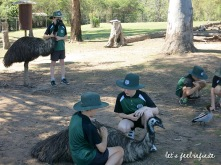 Lone Pine - Schoolboys playing with emus