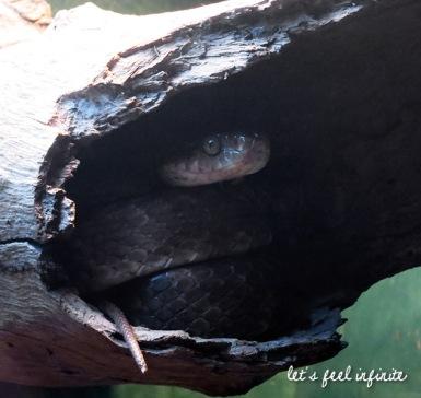 Lone Pine - Snake