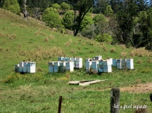 Wybalena Farm - Les ruches