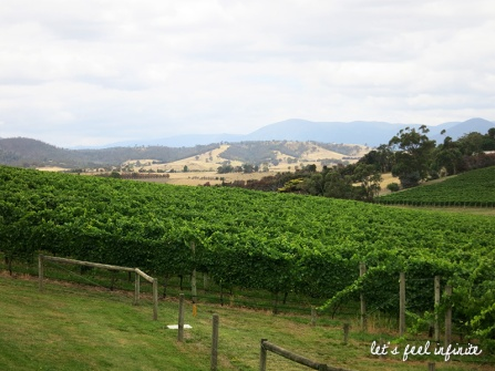 Yarra Valley Wineries Tour - Midi