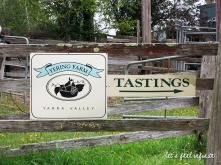 Yarra Valley Wineries Tour - Yering Farm 1