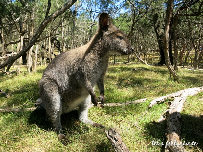 Moonlit Sanctuary - Wallaby 3