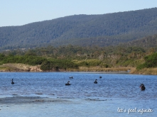 Tasmanie - Côte Est 5