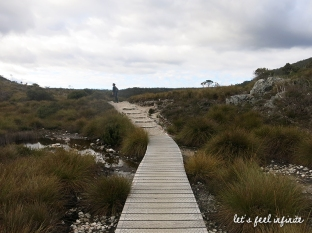 Cradle Mountain 5