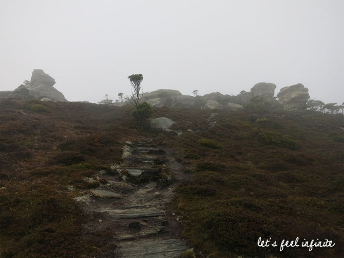Mt Rufus 6