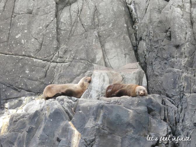 bruny-island-seals