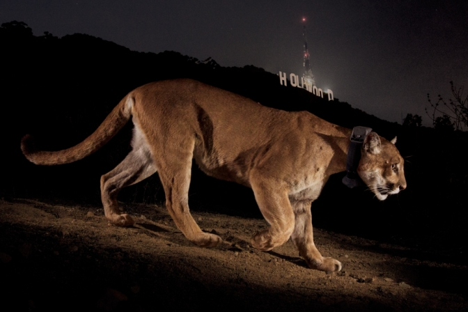 © Steve Winter - National Geographic
